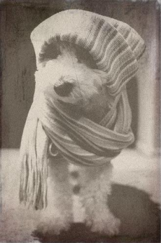 cute winter wear pup aged pic
